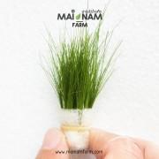A01-Hair-grass-01